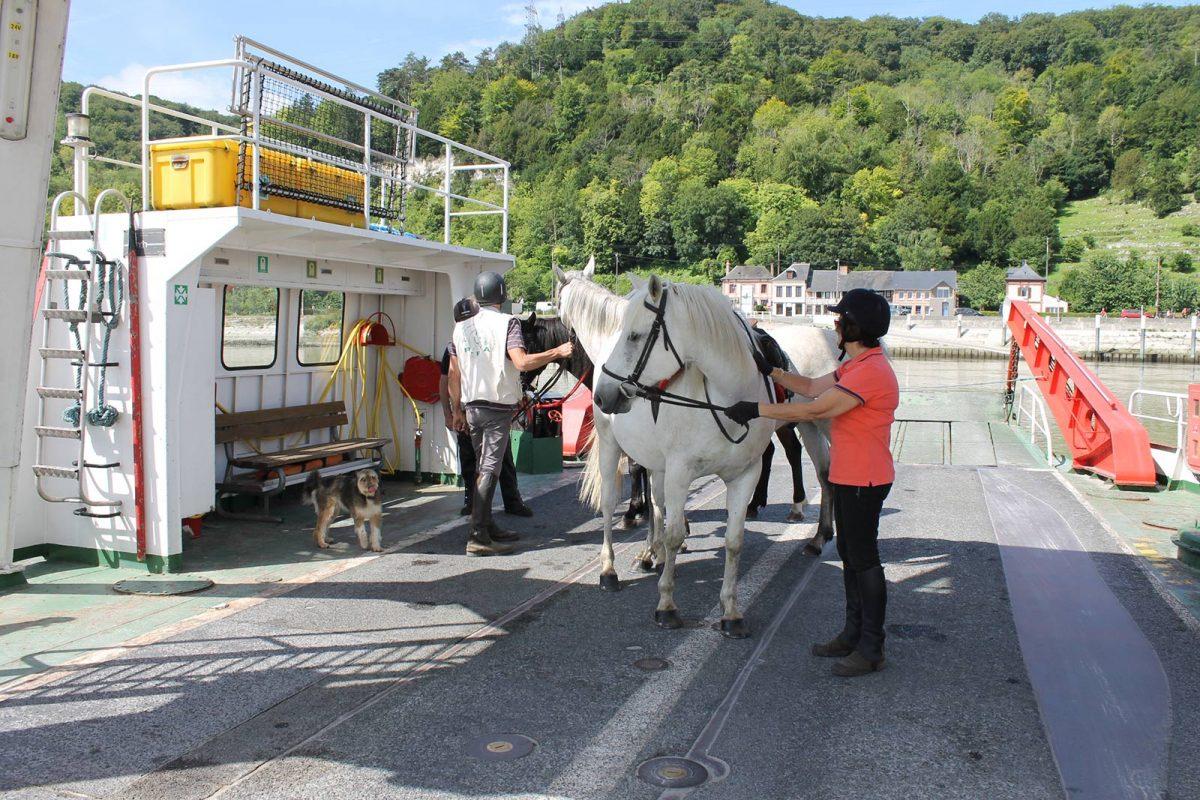 Nettoyage des chevaux avant passage de la Seine