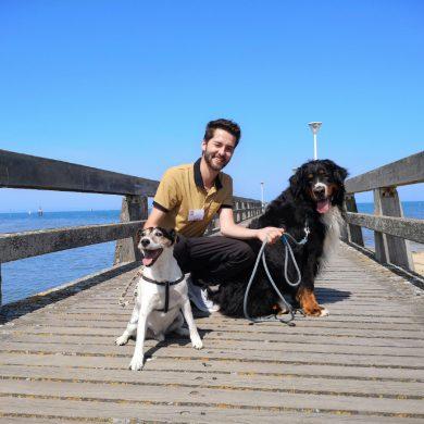 Les plages autorisées aux chiens
