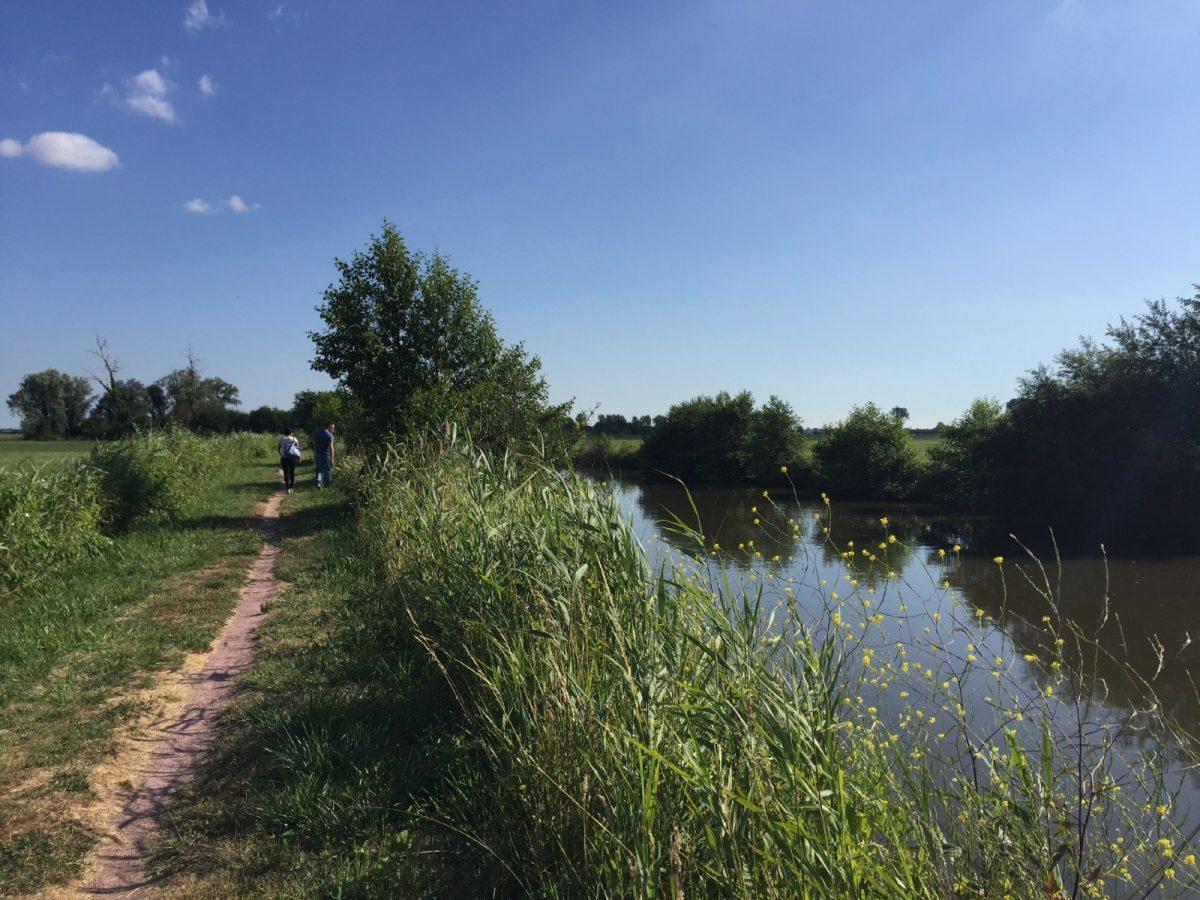 Promenade le long de la Taute, le Marais des Ormes