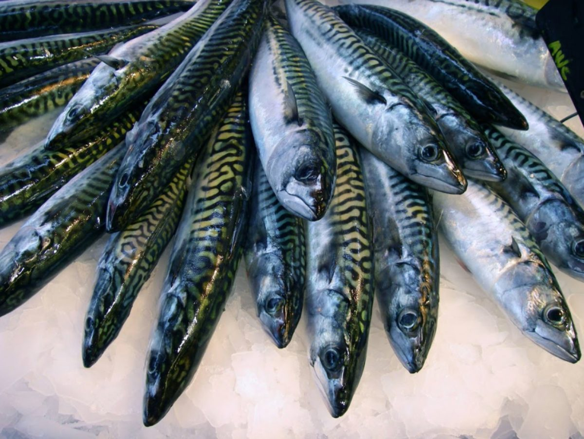 Etale de maquereau à Trouville-sur-Mer