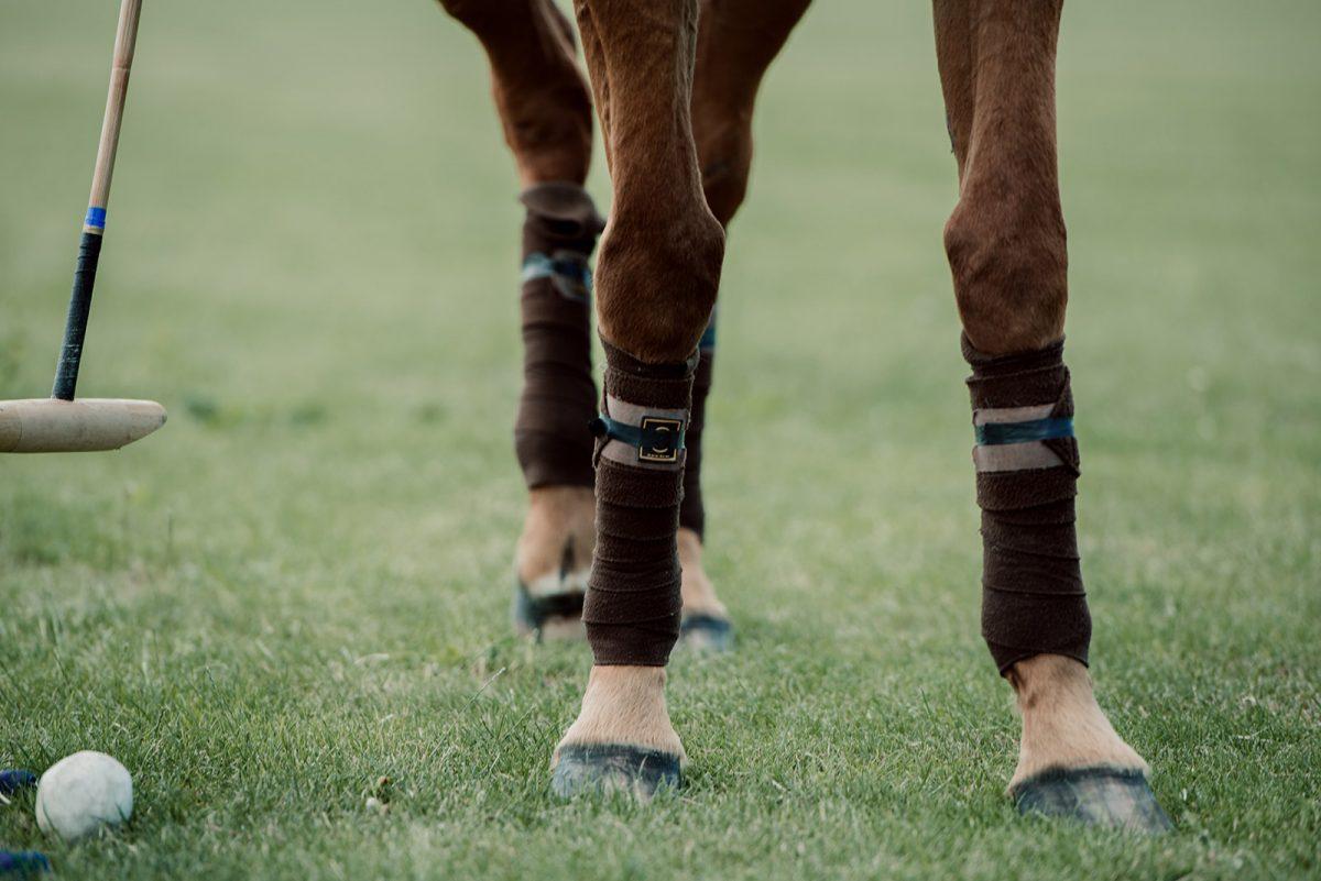 Gros plan sur un cheval équipé pour le polo - expérience