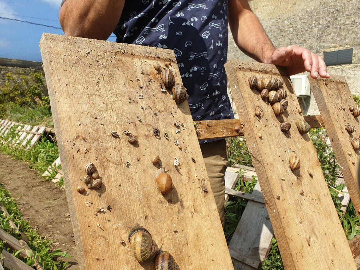 Producteur d'escargots à ferme de Vailly