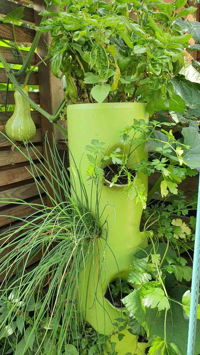 Détail d'un potager en permaculture à Sotteville-Lès-Rouen