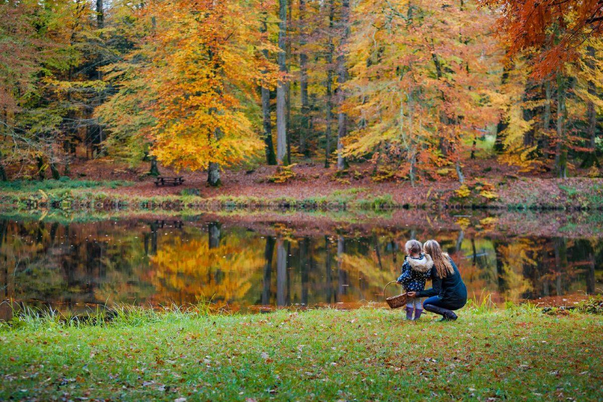 Balade en famille dans la forêt de Bellême