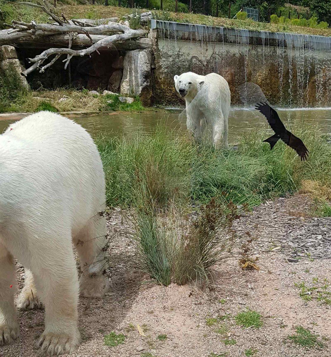 Expérience safari au parc zoologique de Cerza