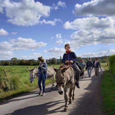 Balade à dos d'âne au cœur du Marais Vernier