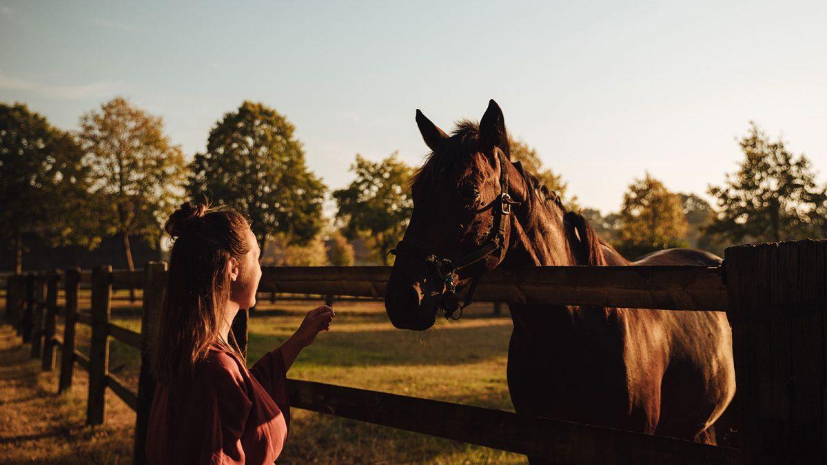 Beuvron-en-Auge, cheval
