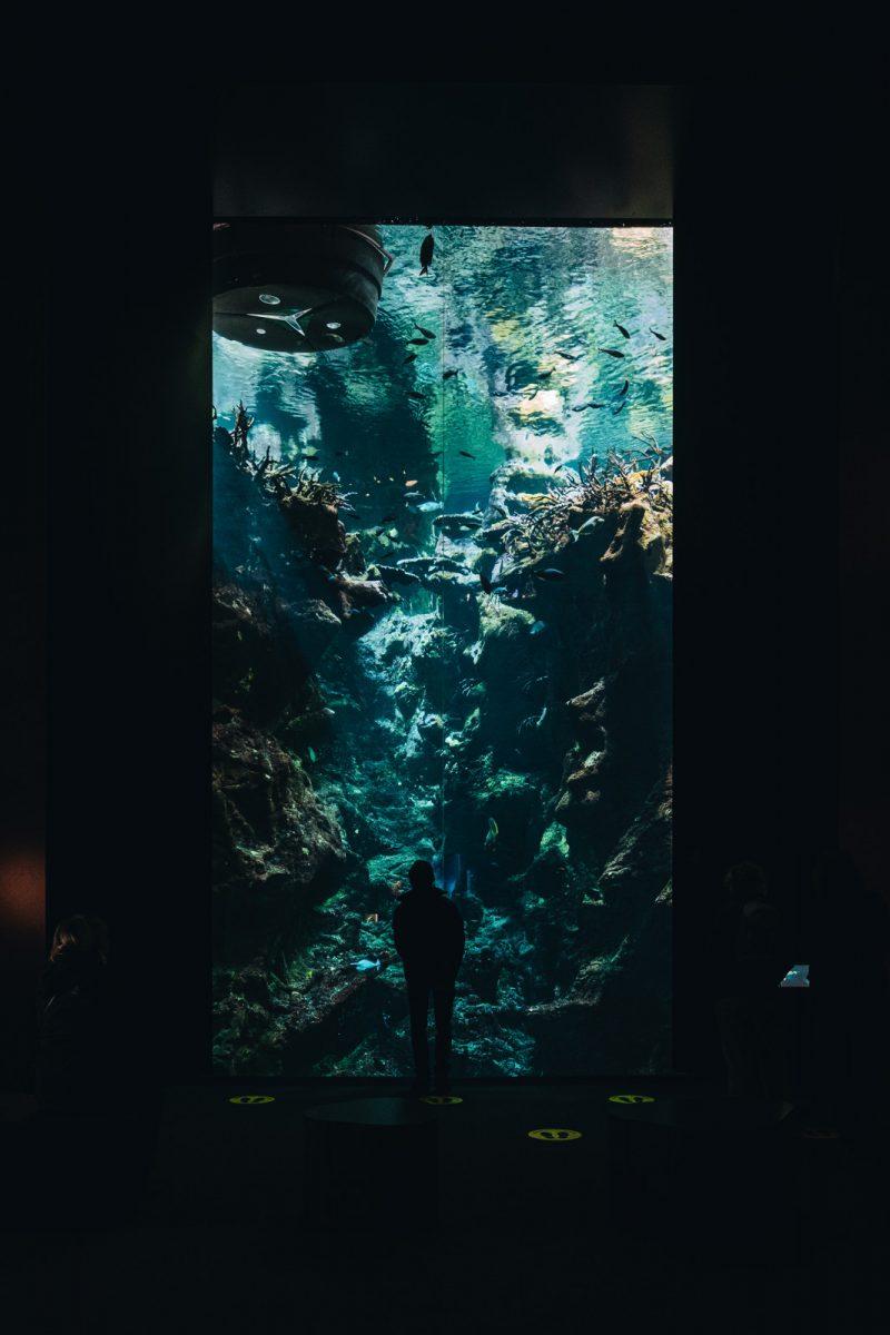 Aquarium à la Cité de la mer