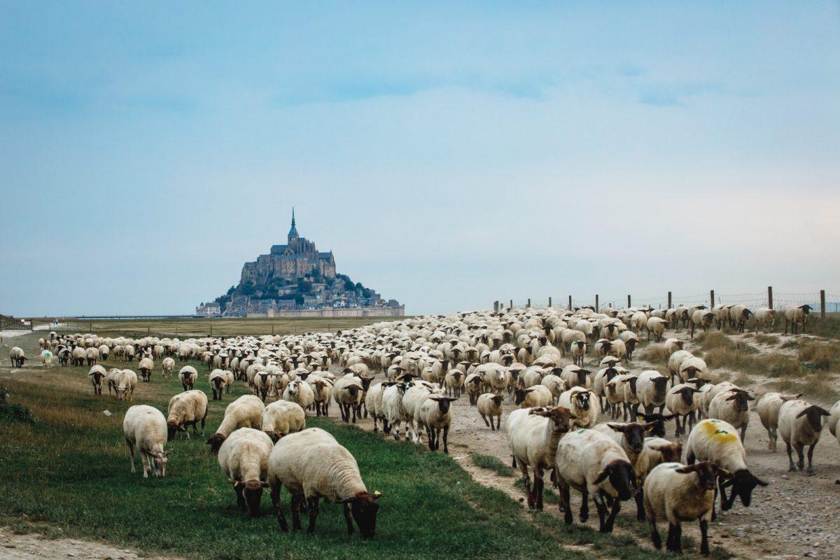 Agneaux face au Mont-Saint-Michel