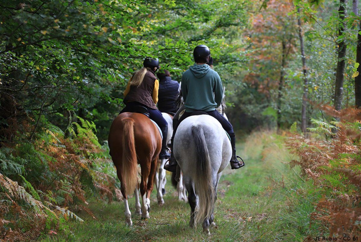 Randonnée à cheval dans l'Orne