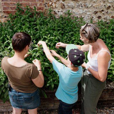 Réaliser sa tisane avec Fée cueillette au château d'Harcourt