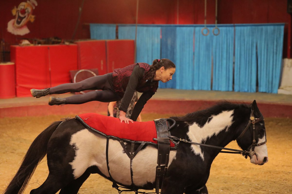 Vargas Show Equestre