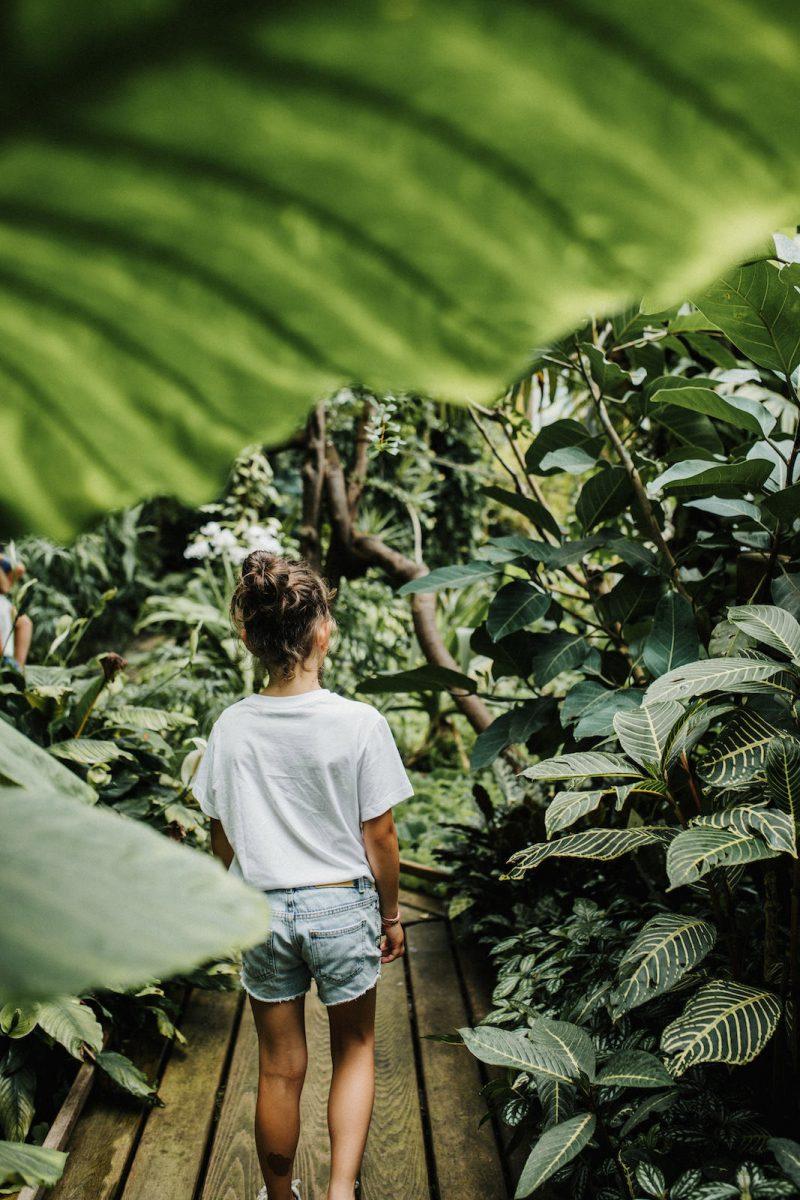 Jardin des plantes à Caen