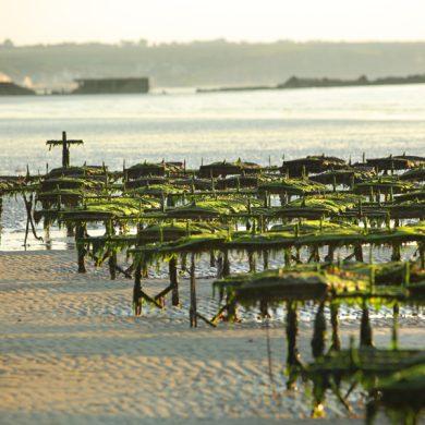 Office de Tourisme intercommunal Seulles Terre et Mer – Bureau d'informations touristiques d'Asnelles