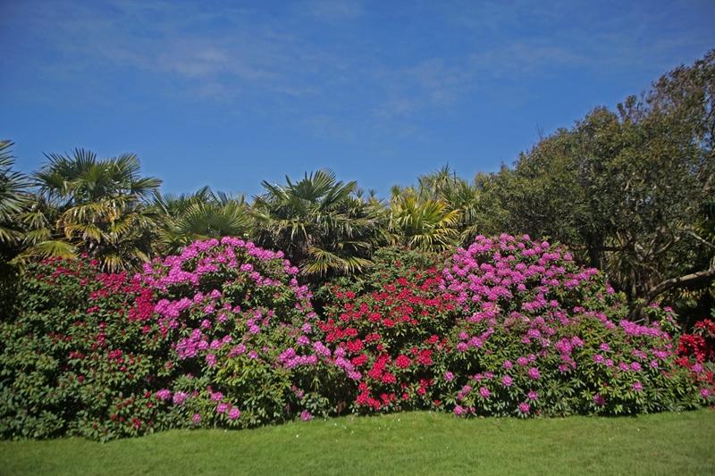 vauville-jardin-botanique-palmeraie-haute©Eric Pellerin